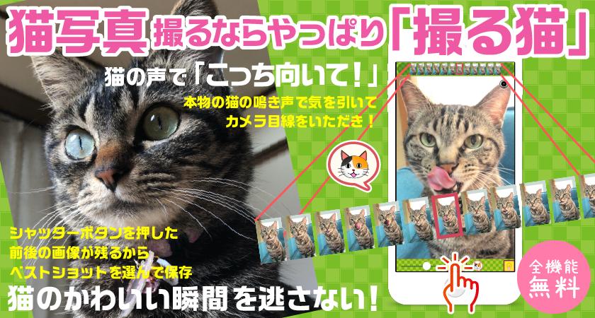 【プレスリリース】猫写真専用カメラアプリ「撮る猫」の新バージョン3.1が5月4日リリース!新たな編集機能追加と撮影機能強化でさらに可愛い猫写真が撮れるように
