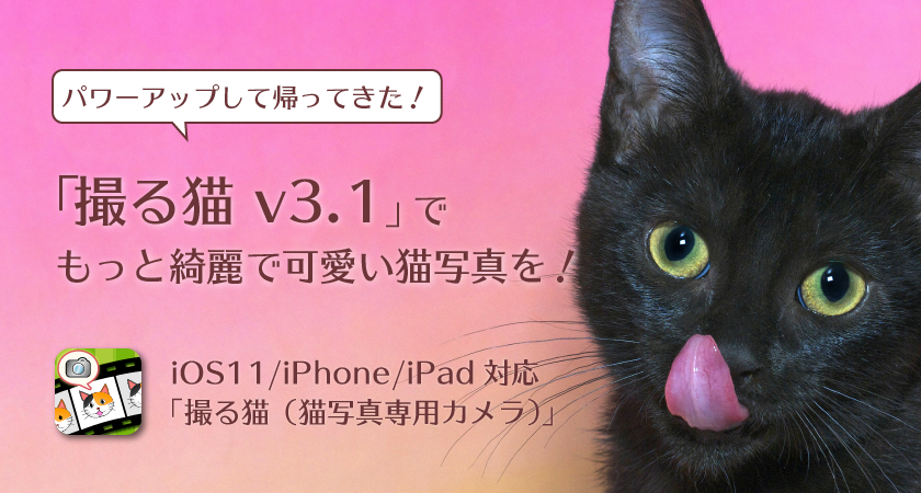 パワーアップして帰ってきた!撮る猫 v3.1でもっと綺麗で可愛い猫写真を!