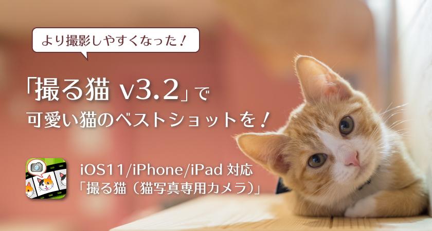 より撮影しやすくなった!撮る猫 v3.2で可愛い猫のベストショットを!