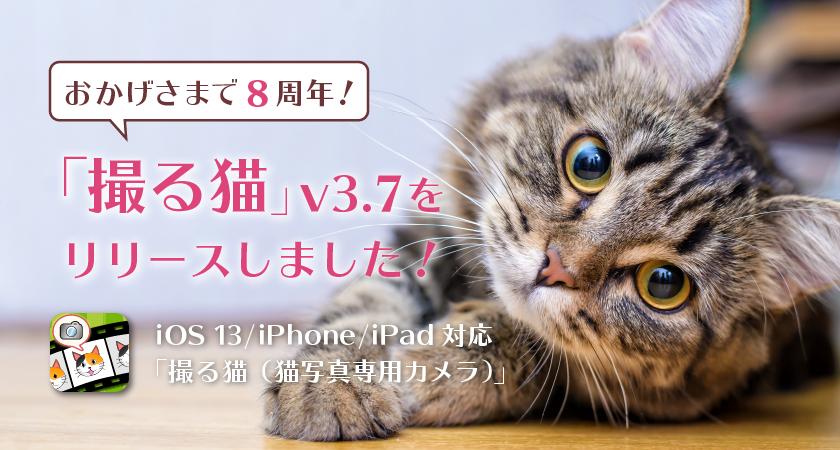 おかげさまで8周年!「撮る猫」v3.7をリリースしました!