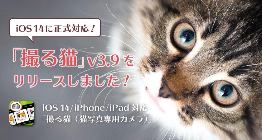 iOS 14に正式対応!「撮る猫」v3.9をリリースしました!